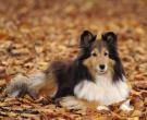 Meegaan met de Herfst - door Koor
